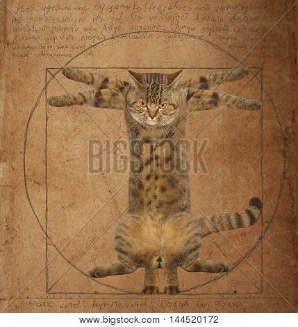 A cat looks like the Vitruvian man.