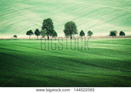 Summer Vintage Rural Landscape