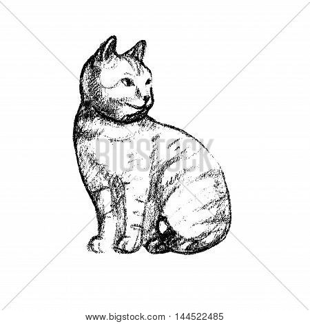 Vector illustration with the image of a cat hand drawn effect. black-and- white line
