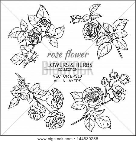 rose flowers vector set on white background