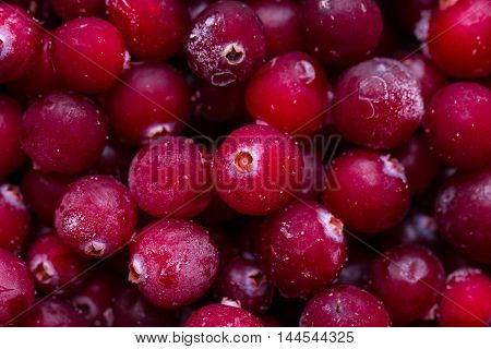 Close up of frozen cranberries. Healthy frozen berries.