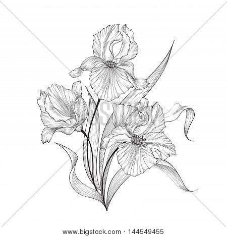 Floral Bouquet With Flower Iris. Vintage Fourish Greeting Card Design. Swirl Flower Posy Isolated Ov