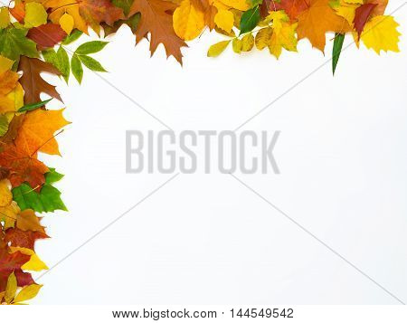 Top and left row of leaves on a white background. Fall decoration.