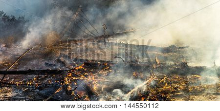 fire in the forest, the trees are burning a lot of smoke