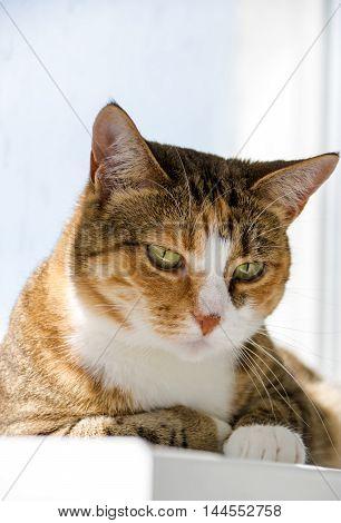 Portrait of a cat on a window sill