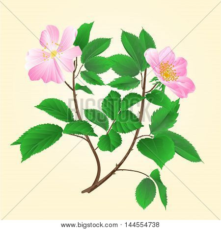 Wild roses twig leaves and flowers vector illustration