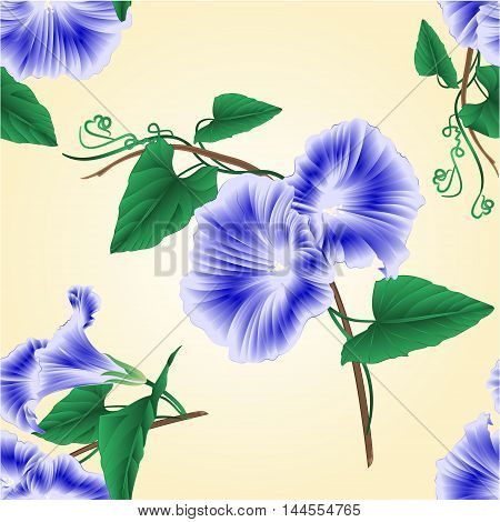 Seamless texture Morning glory blue spring flower vintage vector illustration