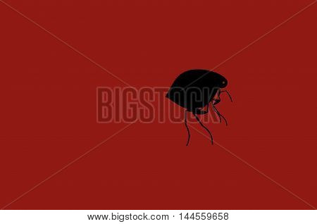 Silhouette black fleas are depicted on a bright red background