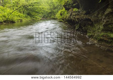 A river in the woods during summer.