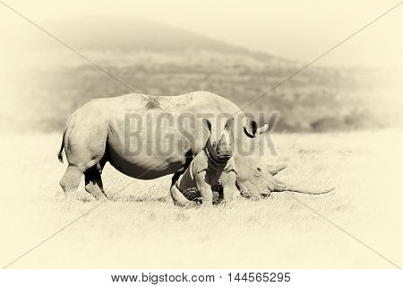 African White Rhino. Vintage Effect