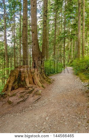 Fragment of Hayward Lake Park trail in Vancouver, Canada.