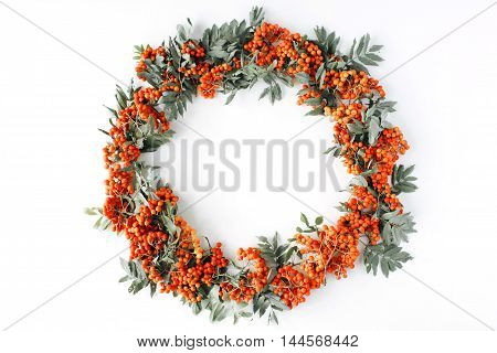 red rowan wreath frame on white background. flat lay frame wreath autumn wallpaper