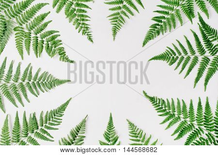 fern branches frame isolated on white background. flat lay top view