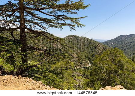 Nice view in cedar valley in Cyprus mountains