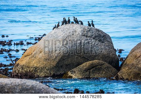 Huge boulders on the beach of the Atlantic Ocean. The concept of  ecotourism. Boulders Penguin Colony in the Table Mountain National Park. African black-and-white penguins