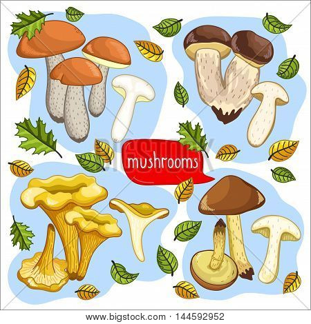 Different types of mushrooms set, chanterelle, cep, porcini, brown cap boletus isolated on white background vector illustration