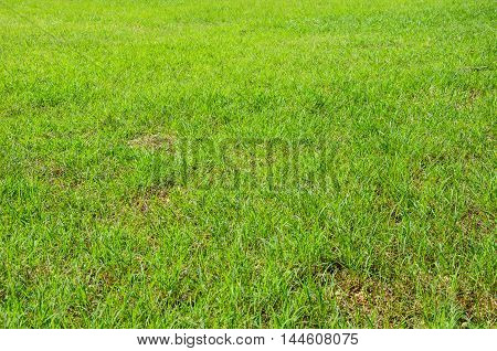 Green grass background, football field green background