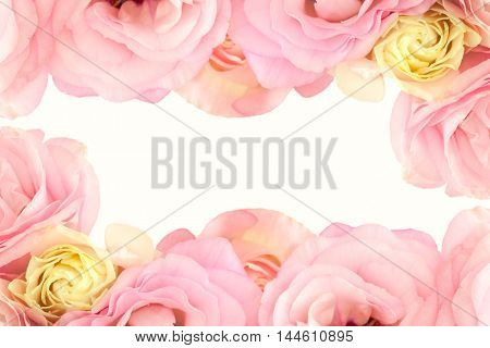 Gentle Pink  Flowers Border - isolated on white background