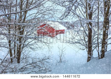Winter Landscape with rural house covered with snow and trees