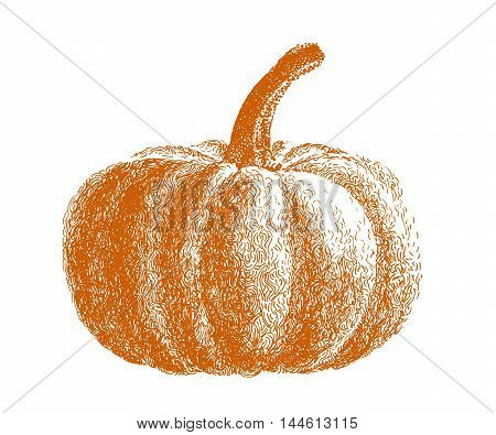 Hand drawn pumpkin. Illustration vegetable Helloween card