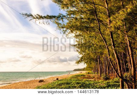 The Sea Or Beach With The Wind Motion Blur Pine Tree In Sunset Warm Light