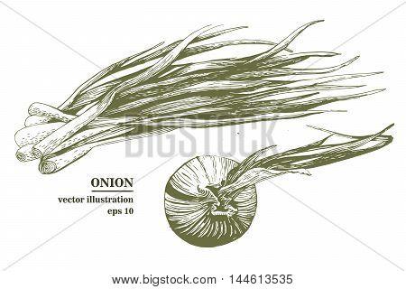 Hand drawn fresh green spring onion illustration. Scetch. Onion set