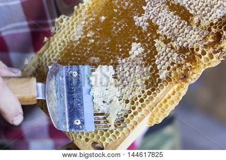 printout of honeycombs, tool for opening honeycombs.