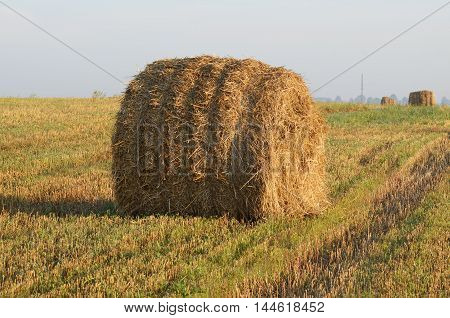 Cereal plants after harvesting are harvested in bales.