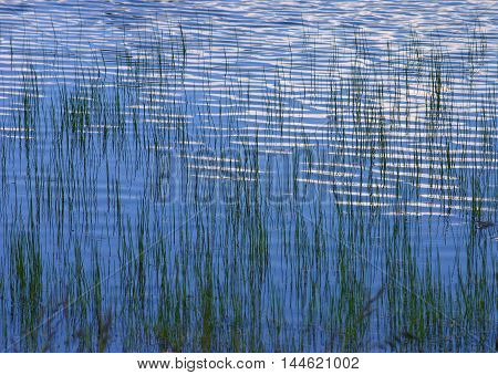 gentle water grass in a mountain lake