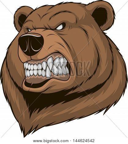 Vector illustration a ferocious bear head on a white background