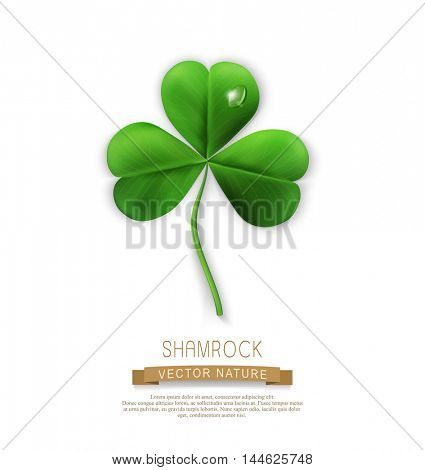vector green shamrock on a white background (element for design) for the holiday st.Patrick