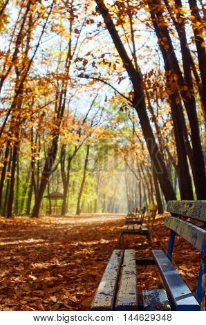 bench in the autumn park. focus is on the bench. Bulgaria Sofia