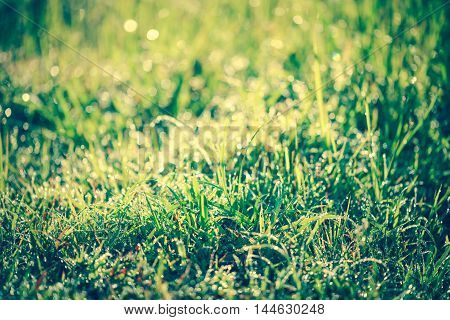 Abstract natural background. Fresh spring grass with dewdrops on grass defocused light blurred background with bright sunlight at the daytime. Outdoors.