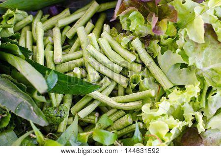 Salad Vegetable (green Oak, Lettuce And Batavia) Leaf And Lentils
