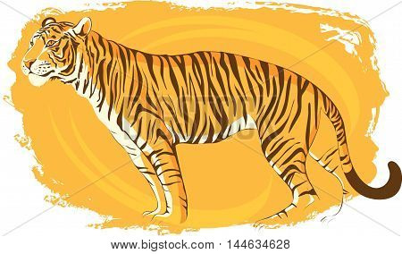 Tiger is in a relaxed posture. On the bright orange background.