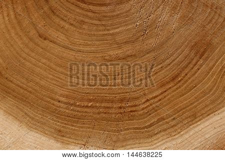 Round timber background, close up