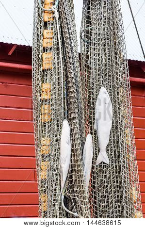 Fishing Net Hanging on Wall for Decoration