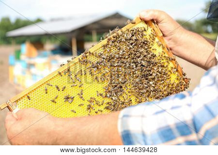 Man holding frame with honeycomb on mobile apiary background