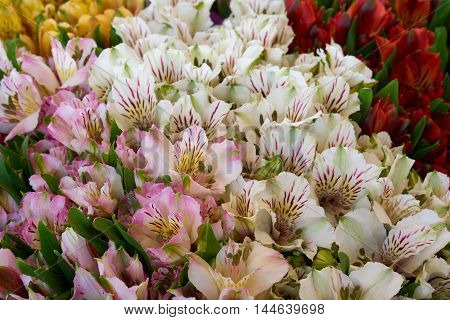 Bunch of beautiful pink white yellow and red flowers