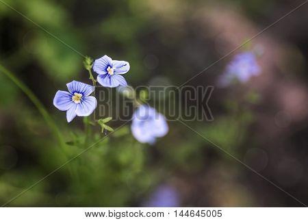 Wildflowers on meadow