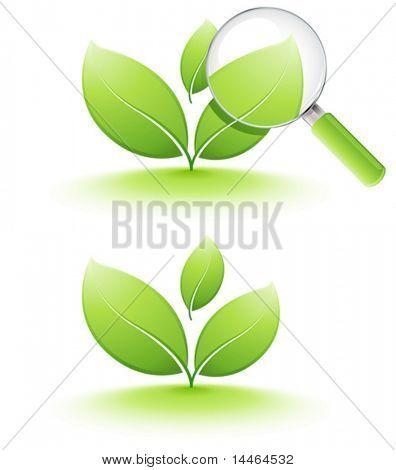 Análisis de la planta joven