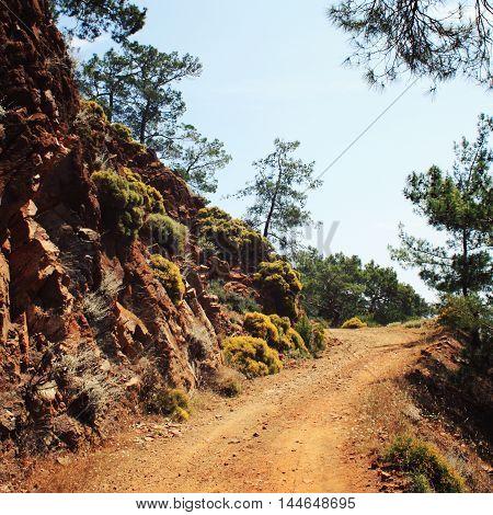 Road to Sazak Bay - toned photo. Pine-trees and rocks. Aged photo. Lycian Way Walking - retro style photo. Antalya Province Turkey. Vertical format.