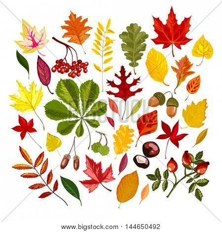 Set of colorful stylized autumn leaves. Vector illustration.