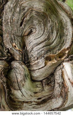 Background, Texture.  Tree Bark, Wood Cap
