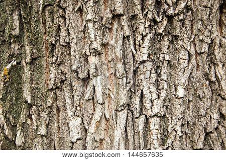 Background, Texture.  Tree Bark,