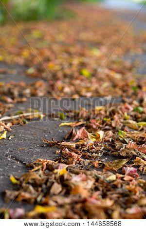 autumn leaves on a city pavement, soft backgraound