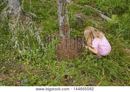 Child blond girl exploring anthill in the woods.