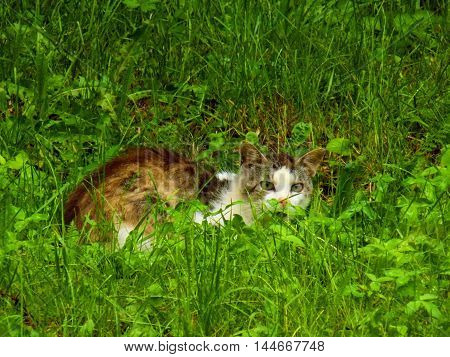 Cat in grass in wild nature during day