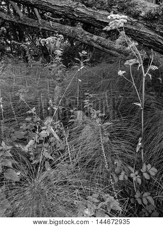 Textured plants within a forest. In England.