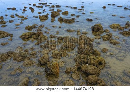 Dead and damaged coral field on the sand floor with sea water are dropping